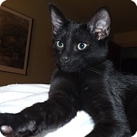 Adopt A Pet :: Sergio - Morganton, NC