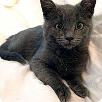 Adopt A Pet :: Kiara the Kitten! *Adoption Pending!* - New York, NY