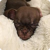 Adopt A Pet :: Remi - Oviedo, FL
