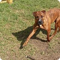 Adopt A Pet :: Roscoe - Houston, TX