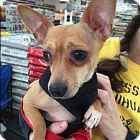 Adopt A Pet :: Griff - Indianapolis, IN