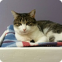 Adopt A Pet :: Poppy - Medina, OH
