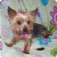 Adopt A Pet :: Daisey - Freemont, CA