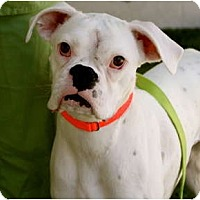 Adopt A Pet :: Gwendolyn - Mission Viejo, CA