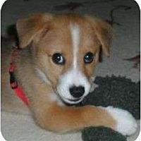 Adopt A Pet :: Kirby - Allentown, PA