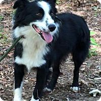 Adopt A Pet :: Brody - Brattleboro, VT