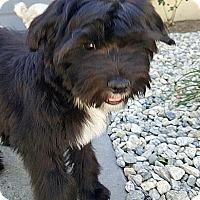 Adopt A Pet :: JACKSON - Winnetka, CA