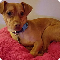 Adopt A Pet :: Abel - Andalusia, PA