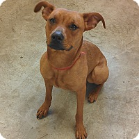 Adopt A Pet :: Little Ann - Larned, KS