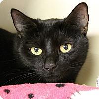 Adopt A Pet :: Raquel Welch - Chicago, IL