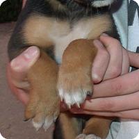Adopt A Pet :: CLEMENTINE - Corona, CA