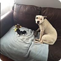 Adopt A Pet :: Paisley - Lancaster, PA