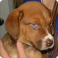 Adopt A Pet :: Alvin - Williams Lake, BC