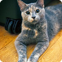 Adopt A Pet :: Gorgeous, Loving Valentina (or Val) LOVES DOGS. - Brooklyn, NY
