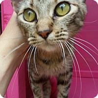 Adopt A Pet :: ARIA - Ocala, FL
