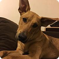 Adopt A Pet :: Jake - Manhattan, KS