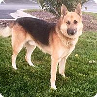 Adopt A Pet :: Tizer - Oswego, IL