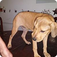 Adopt A Pet :: Joanna - Wytheville, VA