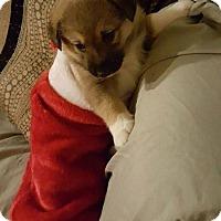 Adopt A Pet :: ETHEL - Winnipeg, MB