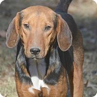 Adopt A Pet :: Molly-calm~ meet me! - Glastonbury, CT