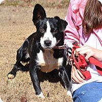 Border Collie Mix Dog for adoption in Acworth, Georgia - Winnie