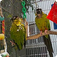 Adopt A Pet :: Tito and Zipper - Fountain Valley, CA