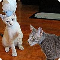 Adopt A Pet :: Kojak & Crocker - Chicago, IL