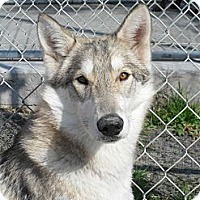 Adopt A Pet :: Sheba #5197 - Jerome, ID