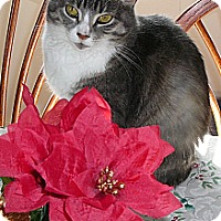 Adopt A Pet :: Adele - Springfield, PA