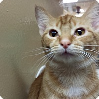Adopt A Pet :: Loco - Frederick, MD