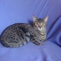 Adopt A Pet :: Scarlet - Sarasota, FL