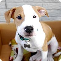 Adopt A Pet :: Chandler - Detroit, MI