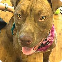 Adopt A Pet :: Benjamin - Hollywood, FL