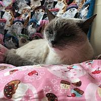 Adopt A Pet :: Ms. Valentine - Nuevo, CA