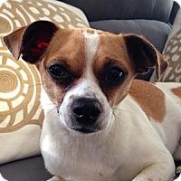 Adopt A Pet :: Briana - Beavercreek, OH