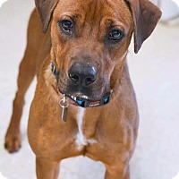 Adopt A Pet :: JONAS - Fort Worth, TX