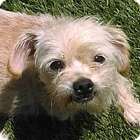 Adopt A Pet :: Louie - Chula Vista, CA