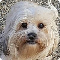 Adopt A Pet :: Dutchess - Bloomington, IL