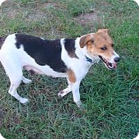 Adopt A Pet :: Jasmine - Oviedo, FL