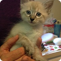 Adopt A Pet :: Jessica - Temecula, CA