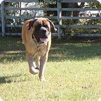 Adopt A Pet :: Prince - Norwood, GA