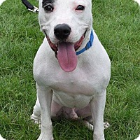 Adopt A Pet :: Petey - Valparaiso, IN