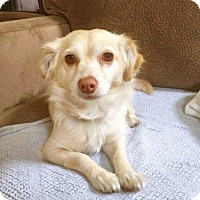 Adopt A Pet :: Lana Turner - Pittsburg, CA