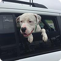 Adopt A Pet :: Roscoe/Caspe - White Settlement, TX