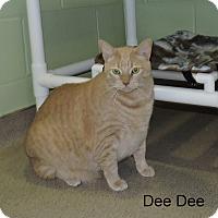 Adopt A Pet :: Dee Dee - Slidell, LA