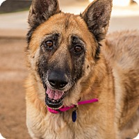 Adopt A Pet :: Nettie - Phoenix, AZ