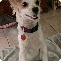 Adopt A Pet :: Missy - Ruskin, FL