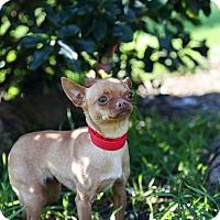 Adopt A Pet :: Lady Bug - Auburn, CA