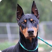 Adopt A Pet :: Pykes - Fillmore, CA