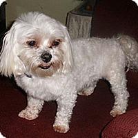 Adopt A Pet :: Miles - Mooy, AL